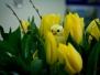 Niedziela Palmowa - 28 kwiecień
