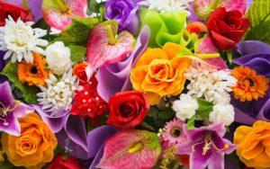 Różne kolorowe kwiaty